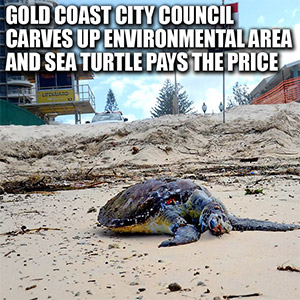 Sea Turtle Pays Price