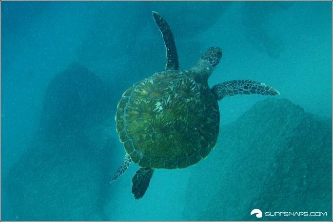 Turtle in Seaway